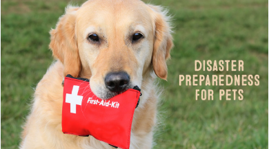 Is Your Pet Prepared